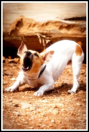 howlingdog